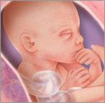 Hamilelik 21.hafta