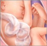 Hamilelik 26.hafta